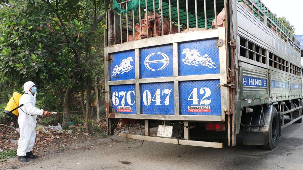 Ban Bí thư ban hành Chỉ thị về thực hiện hiệu quả công tác phòng, chống, khống chế bệnh dịch tả lợn châu Phi